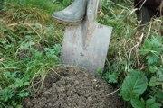 Maulwürfe graben ausgedehnte Gangsysteme im Boden. Durch ihre Wühltätigkeit tragen sie dazu bei, dass der Boden durchmischt, gelockert und durchlüftet wird. Sie sind somit maßgeblich an der Entwicklung der Bodenstruktur beteiligt.