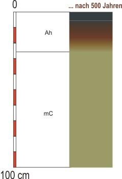 Grafik Bodentyp: Ranker