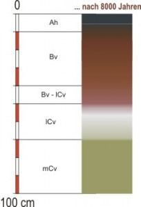 Grafik Bodentyp: Baunerde