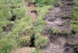Bodenerosion am Wanderweg in den Alpen