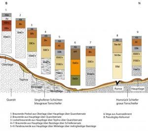 Bodengesellschaft im Taunus
