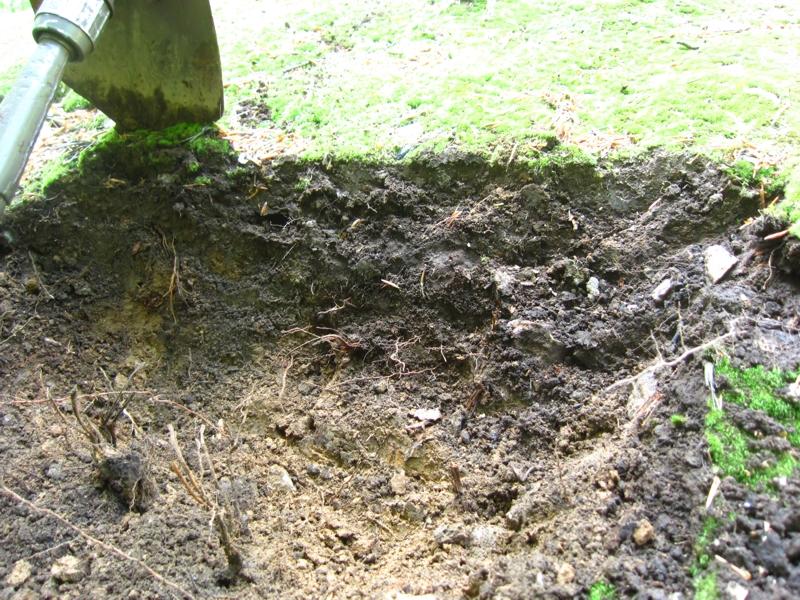 Bodentyp Ranker