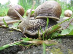 Auch Weinbergschnecken verbringen einen Teil ihres Lebens im Boden. ©Alexander Stahr