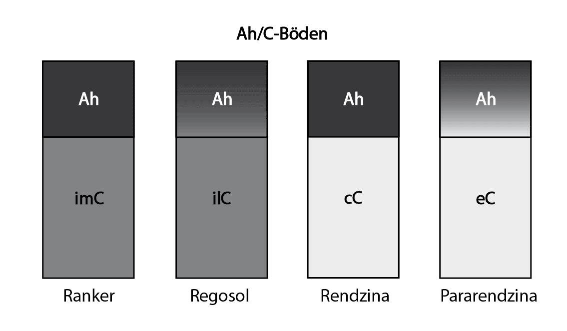 Ah/C Böden