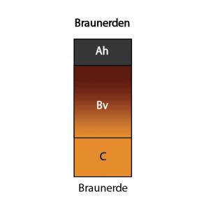 Braunerde