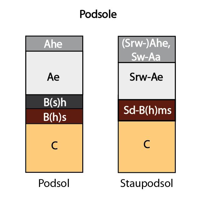Podsole