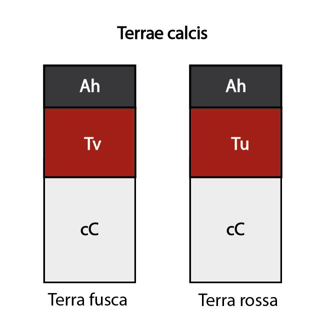 Terrae