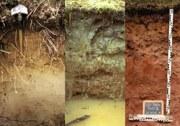 Bodenprofile