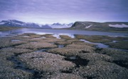 Frostmusterböden auf Svalbard (Spitzbergen)