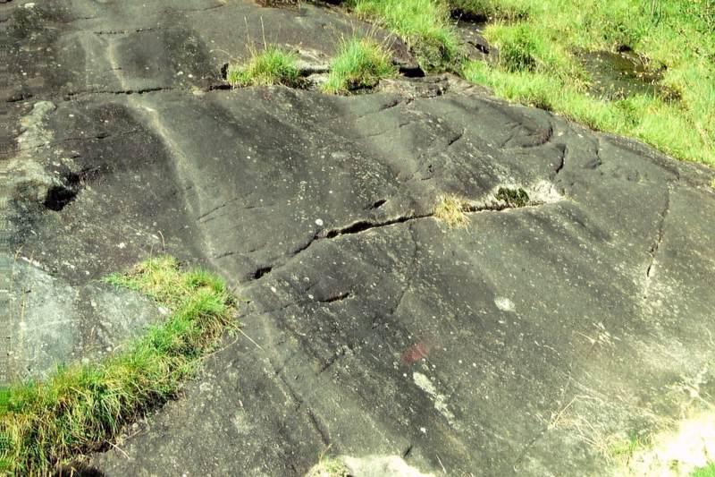 Besiedlung von Felsen durch Pflanzen