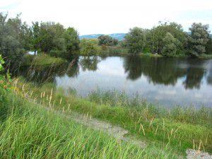 Der Bodentyp Dy bildet sich in stehenden Gewässern