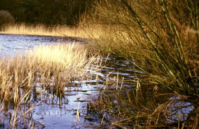 Faulschlamm findet sich oft in Seen