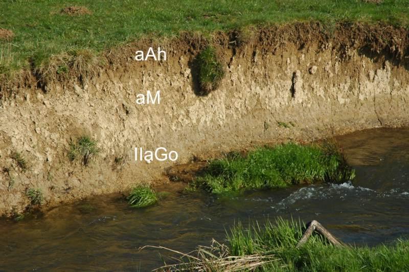 Bodentyp vega for Bodentypen der erde
