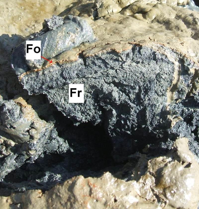Horizontierung des Bodentyps Watt