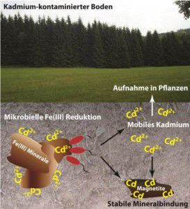 Kadmium im Boden