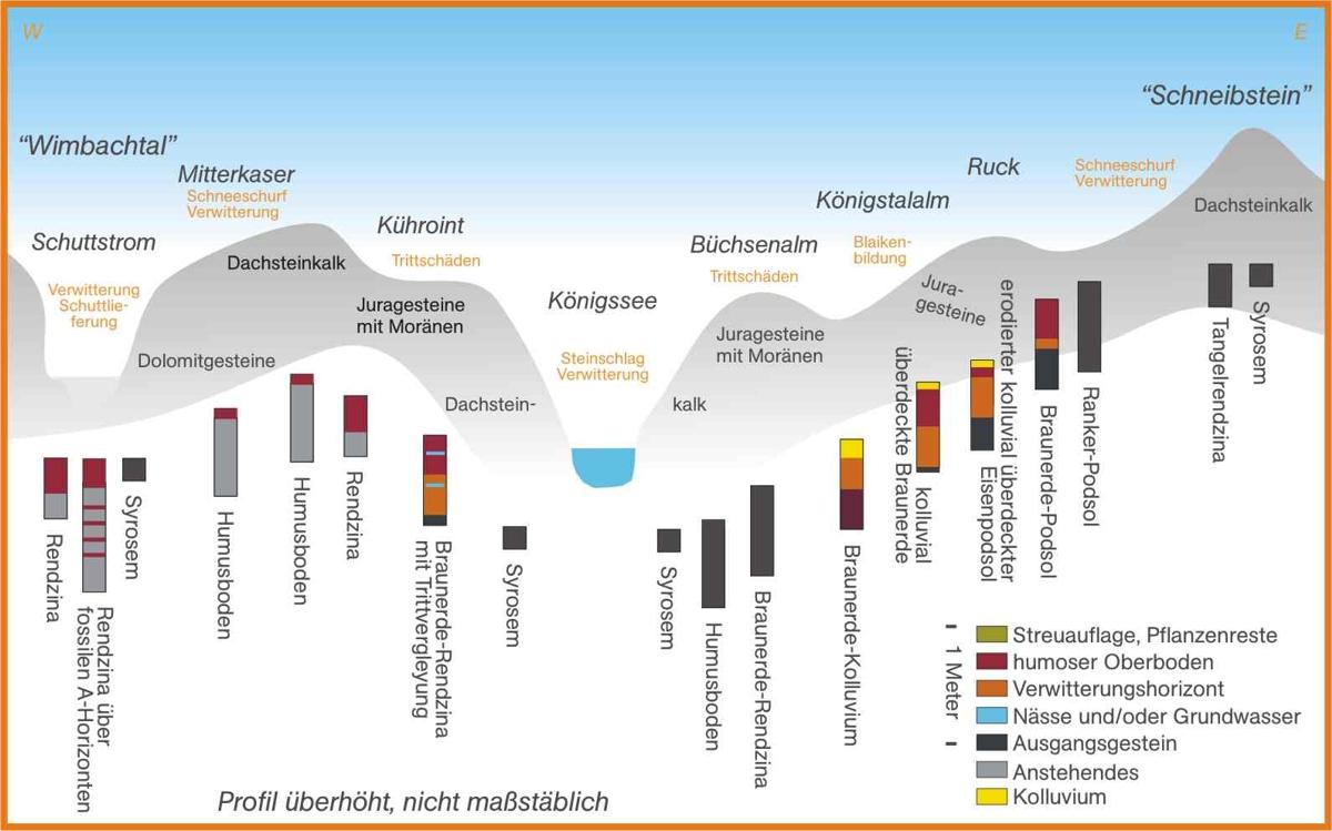Bodenabfolge in den Berchtesgadener Alpen