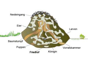 Nestaufbau der Waldameise