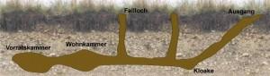 Feldhamsterbau schematisch