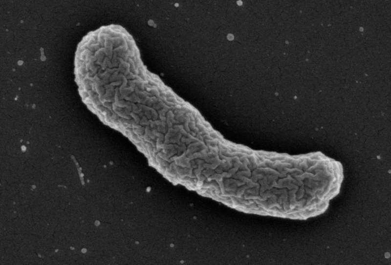 aha-aktuell-2015-antibiotika