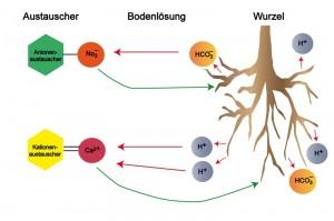 Ionenaustausch