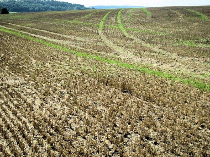 Landwirtschaftlich genutzte Flächen leiden offenbar an Humusschwund