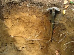 Boden-los? Nutzung, Gefährdung und Schutz der Böden