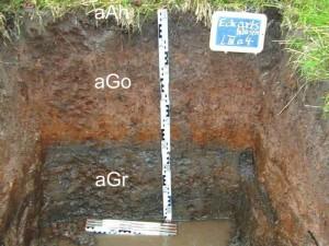 Gley oder Grundwasserboden