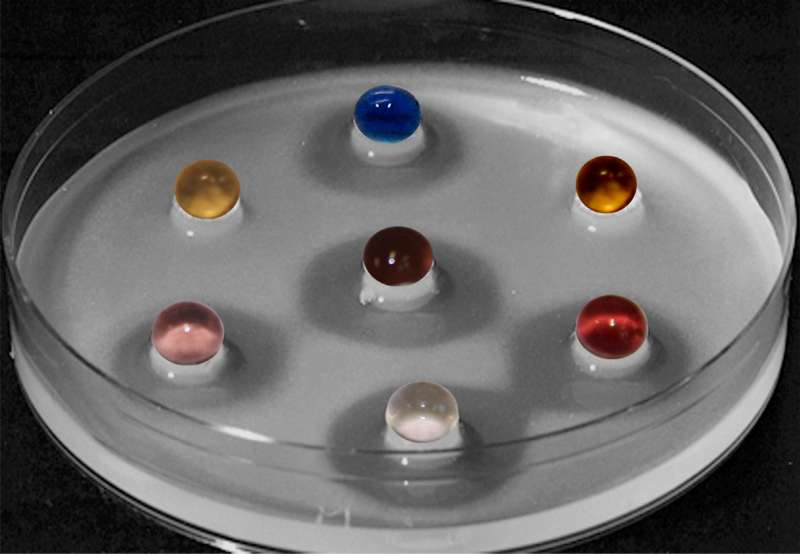 Streptomyceten können Bakterien abtöten