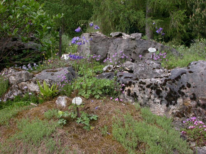 Steingarten Ahabc De