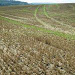 Glyphosat-Diskussion: Agrarwissenschaftler plädiert für gezielteren Einsatz statt Verbot