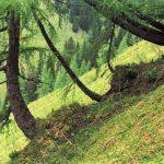 Signifikanter Humusverlust in Wäldern der Bayerischen Alpen