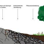 Woraus entsteht Boden?