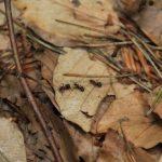 Mehr ist besser: Laubabbau im Wald