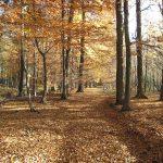 Hungrige Bäume: Forscher gehen Nährstoffverlusten im Wald auf den Grund