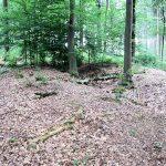 Neues Forschungsprojekt: Welchen Nutzen hatten Wölbäcker?