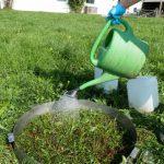 Zwei für Deutschland neue Regenwurmarten bei Kirchweidach gefunden