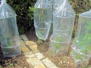 Regenschutz für Tomaten