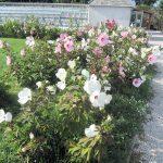 Tagung: Historische Gärten im Spannungsfeld zwischen Klimaanpassung und konservatorischem Auftrag