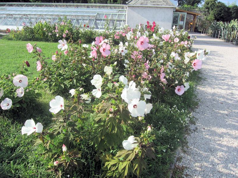 Im Garten des Barockschlosses Keszthely, Ungarn
