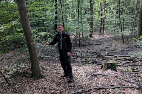 Waldböden: Die Besonderen