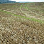Stickstoffumsatz im Boden besser verstehen