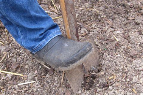Wie entnehme ich eine Bodenprobe im Garten?