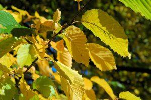 Herbstlaub im Garten – einfach kompostieren