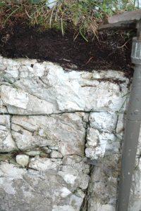 Felshumusboden über Dachsteinkalk
