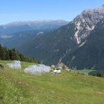 Pflanzen und Bodenmikroorganismen: Bewirtschaftung von Bergwiesen beeinflusst Belastbarkeit gegenüber Klimaextremen