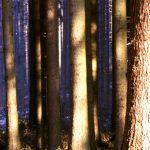 Bodenpilze: Stickstoff-Einträge schaden dem Zusammenspiel von Waldbäumen und Pilzen