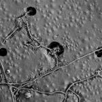 Bodenmikroben bauen Kunststofffolie ab