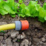 Notfallmaßnahmen gegen Hitzestress im Garten