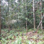Überraschung aus dem Urwaldboden: Bodenorganismen im Amazonas-Regenwald können die chemische Zusammensetzung der Erdatmosphäre beeinflussen