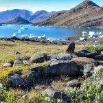 Permafrostböden in der Arktis: Mit dem Klimawandel halten höherwüchsige Pflanzen in der Tundra Einzug